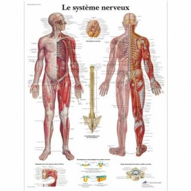 AFFICHE SYSTEME NERVEUX