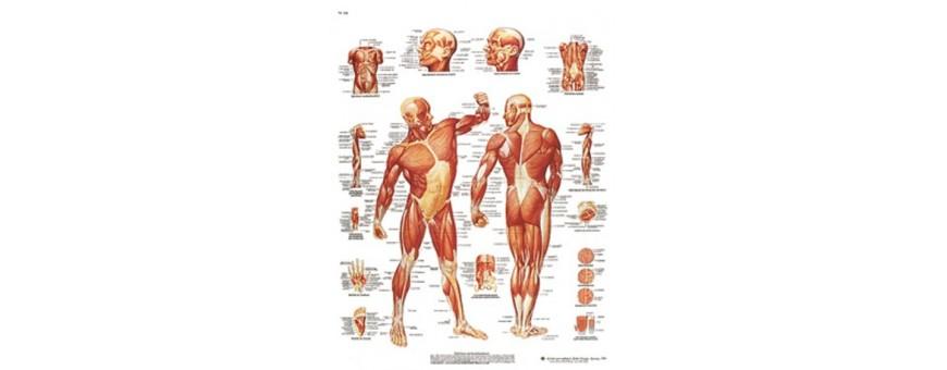 Diagnostic- Ostéologie